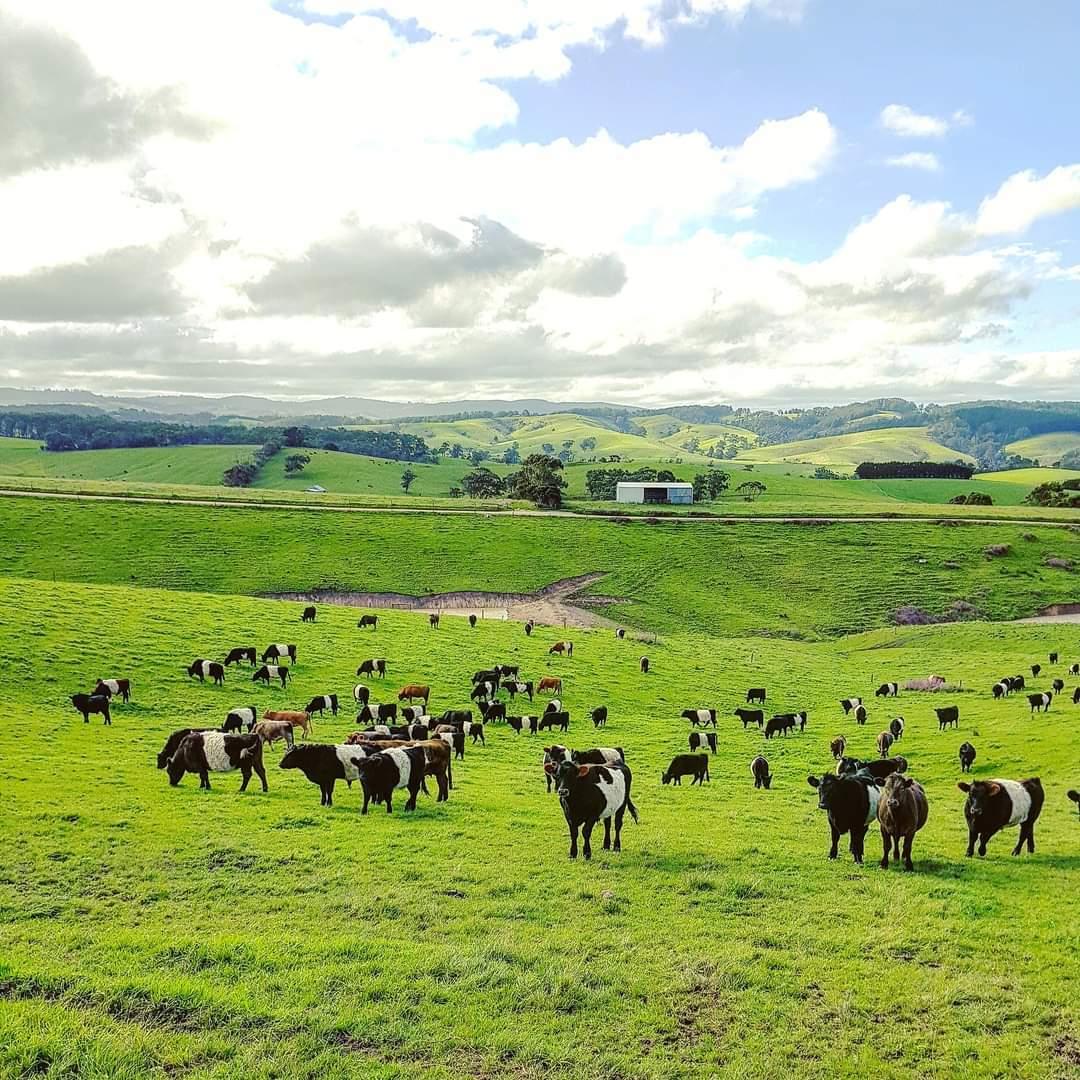 Cô giáo tiếng Anh theo chồng sang Úc làm nông dân, chăm 300 con bò