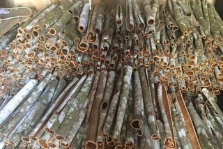 Trồng thứ cây bán cả lá, cành lẫn vỏ, nông dân Bắc Hà thu gần 300 tỷ đồng