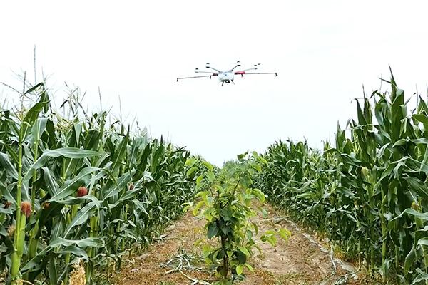 Tự chế máy bay không người lái để xác định sức khỏe cây trồng