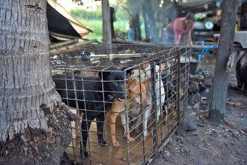 Sợ bệnh tật, người Campuchia bắt đầu nói không với thịt chó