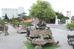 'Báu vật' nhà Phật, lần đầu xuất hiện khiến giới chơi cây choáng ngợp