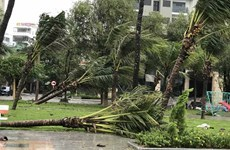 Storm Molave makes landfall in central Vietnam