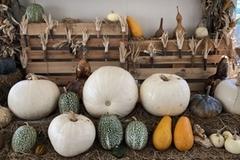 Unique Halloween pumpkin garden opens in Da Lat city