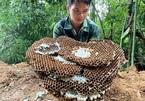 Unusual careers: raising wasps, growing mushrooms via smartphone