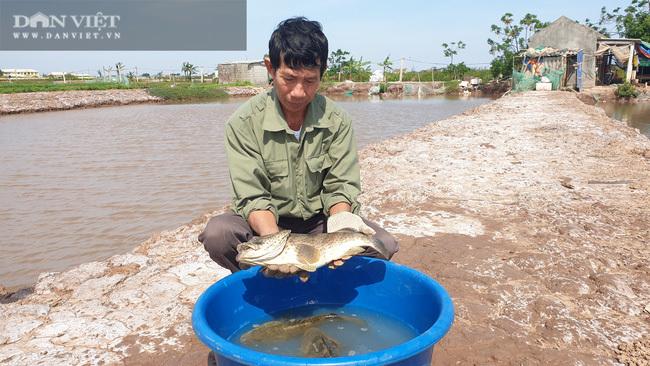 Vì sao đàn cá mú đặc sản gần 1.000 tấn ở đây con nào cũng gầy đi trông thấy, nông dân lo?