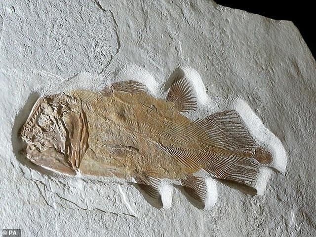 1,5 tỷ đồng cho một con cá 200 triệu năm tuổi