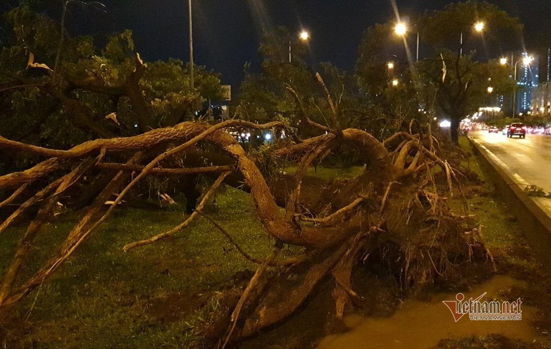Hàng chục cây xanh bật gốc, ngã gục trên đại lộ Sài Gòn