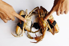 Cách chọn cua biển chắc thịt, gạch đặc béo ngậy