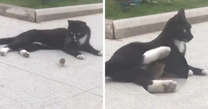 Ngộ nghĩnh cặp đôi mèo Tom và chuột Jerry trong đời thực