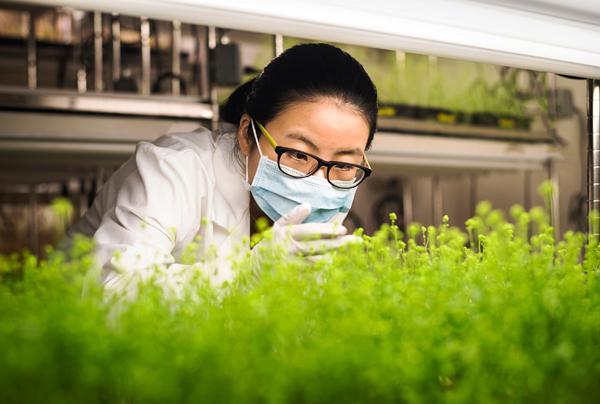 Medicago cung ứng 76 triệu liều vắc xin Covid-19 nguồn gốc thực vật