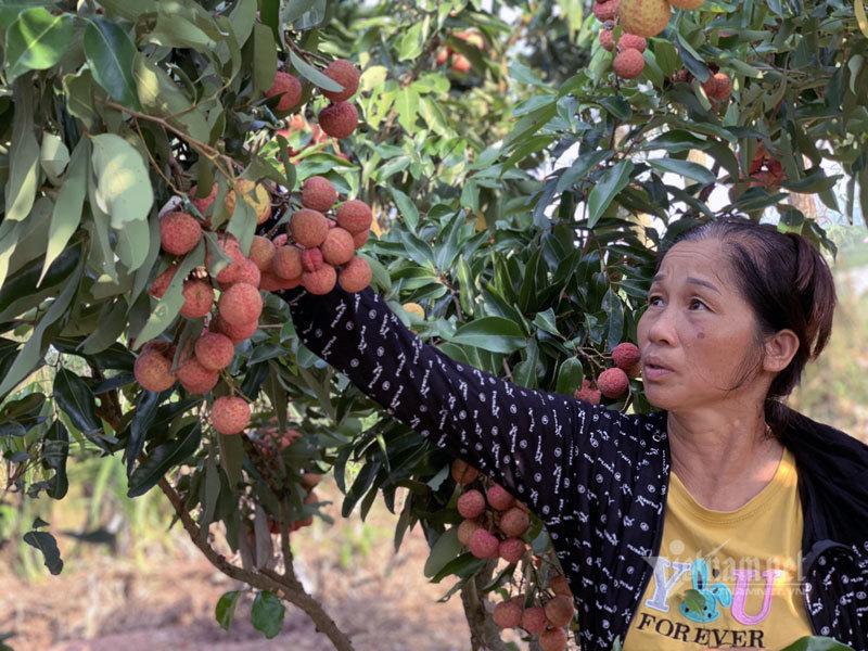 Farmers livestream to sell oranges, tea around the globe