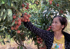 Farmers livestream to sell oranges, tea around the globe