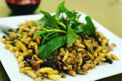 Roasted bee pupae – a starter to get the taste buds buzzing