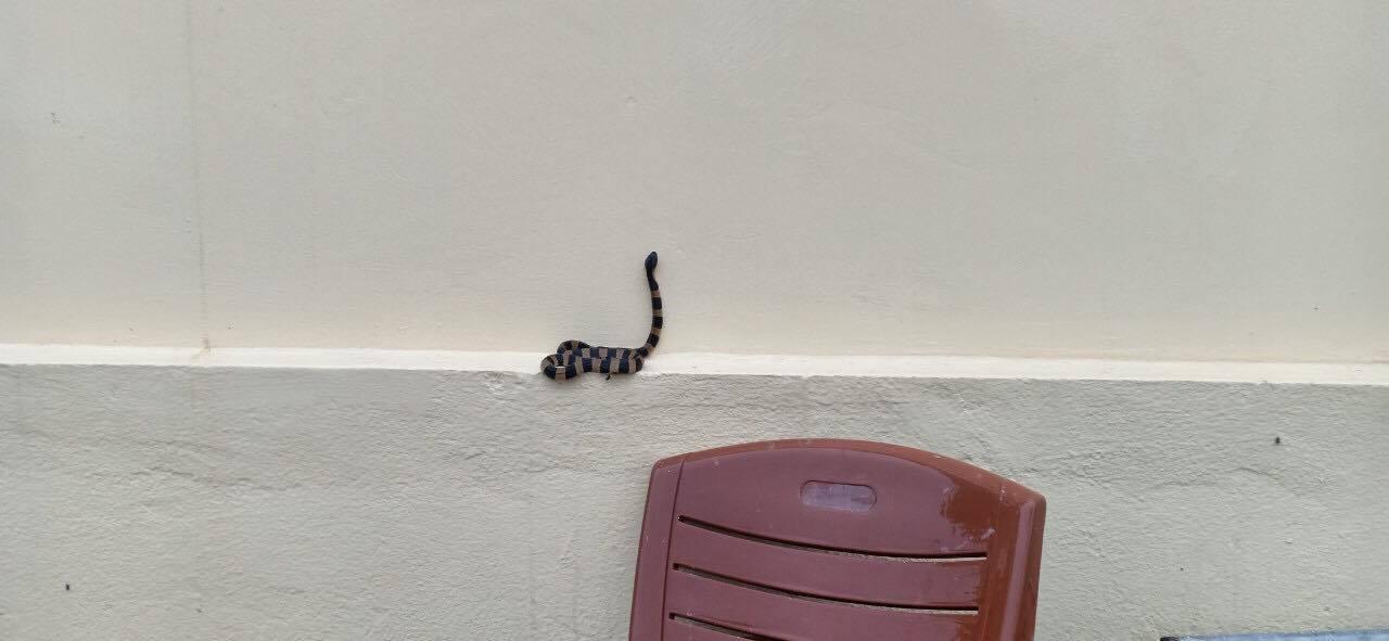 Nhà ở, văn phòng ở Hà Tĩnh xuất hiện nhiều rắn độc