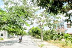 Nông thôn ngoại thành TP.Hồ Chí Minh ngày càng rút ngắn khoảng cách với các quận nội thành