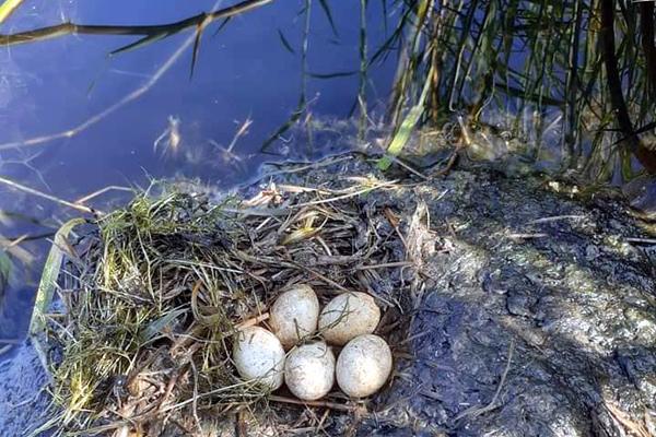 Trứng loài chim lạ 50 nghìn/quả, mực ma đại dương 55 nghìn/kg