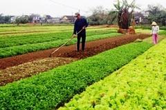 Nhân rộng các mô hình khuyến nông, góp phần thúc đẩy nông thôn mới ở Thừa Thiên-Huế