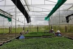 Phú Tân khuyến khích nông dân ứng dụng công nghệ cao trong nông nghiệp