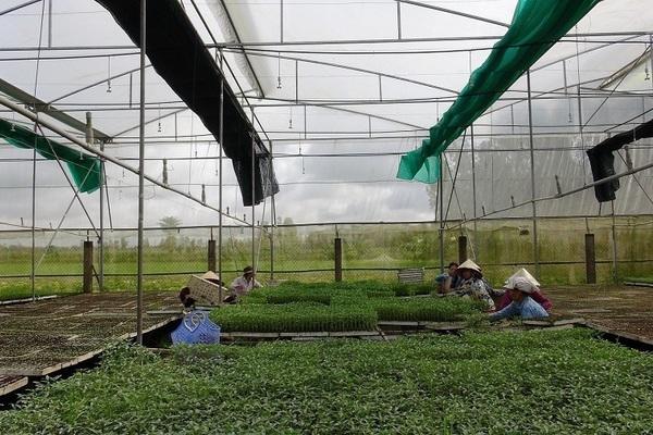 Phát triển nông nghiệp thông minh theo tinh thần Đại hội XIII của Đảng