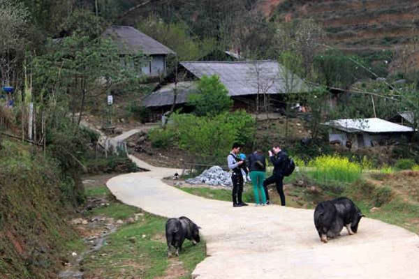 Tiêu chí môi trường trong NTM: Nỗ lực di dời chăn nuôi ra khỏi khu dân cư