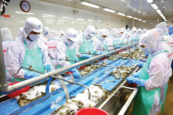 Rising shrimp exports require responsibility