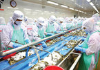 Rising shrimp exports require responsibility