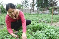 Làng rau thu nhập cao ở khu dân cư nông thôn mới kiểu mẫu