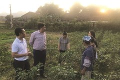 Hòa An đẩy mạnh tái cơ cấu nông nghiệp gắn với xây dựng nông thôn mới