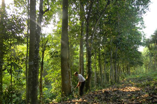 Xã Thuận Hóa phát huy lợi thế từ rừng để cải thiện tiêu chí thu nhập