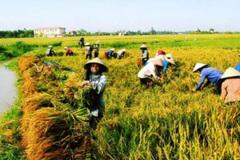 Mô hình HTX kiểu mới trong nông nghiệp giúp cải thiện bền vững tiêu chí thu nhập