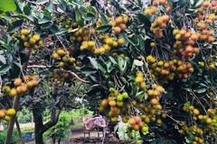Đồng Nai đi đầu trong xây dựng NTM nhờ phát triển cây trồng có thế mạnh