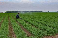 NTM Bắc Ninh: Hỗ trợ phát triển kinh tế trang trại