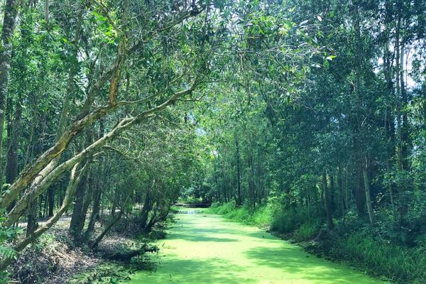 Du lịch xanh: Sự bảo đảm cho phát triển du lịch bền vững