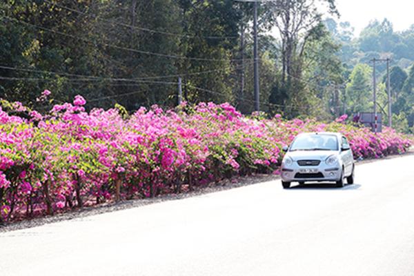 Ấn tượng gần 20km đường hoa luôn rực rỡ sắc đỏ, sắc hồng