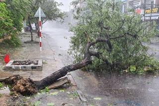 Dự báo thời tiết 11/11: Miền Trung quay quắt với mưa giông, gió giật