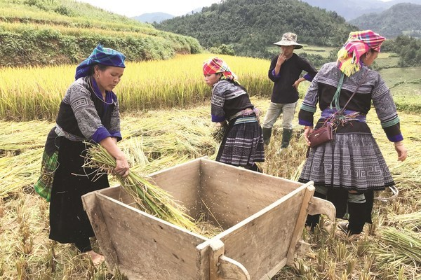 Phụ nữ Mù Cang Chải tích cực góp phần xây dựng nông thôn mới