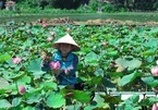 Sampling lotus cuisine of northern Vietnam