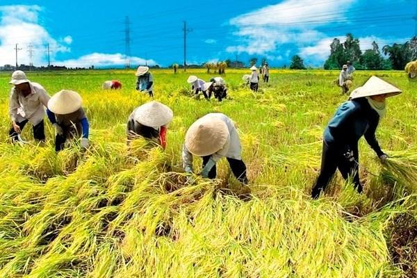 Hợp tác xã: Nhân tố tích cực trong xây dựng nông thôn mới