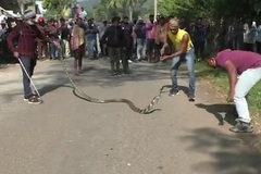 Chen chân xem bắt rắn độc dài4m trước cổng trường tiểu học