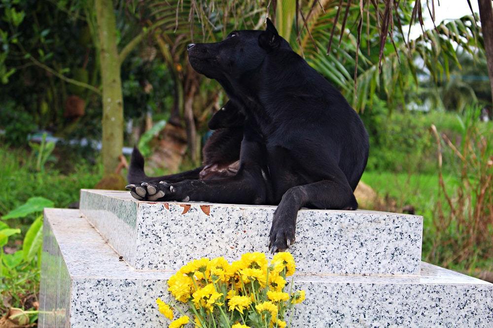 Chú chó trung thành nằm canh mộ chủ nhân suốt 3 năm ở Long An