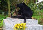 Chú chó trung thành nằm canh mộ chủ 3 năm ở Long An
