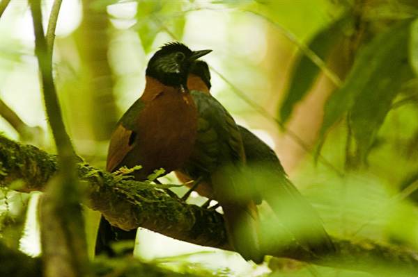 Flora & fauna survive under watchful eyes