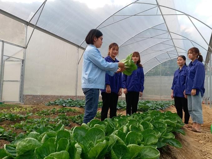 Cô gái miền núi mang khát vọng đào tạo nông nghiệp công nghệ cao