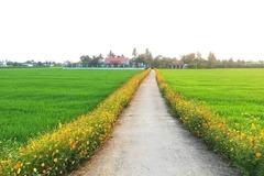 Lạng Sơn phấn đấu 13 xã đạt chuẩn nông thôn mới vào cuối năm 2020