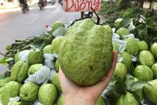 Ổi 'Lệ Rơi' 1,5 kg, bơ khổng lồ 2kg về chợ hút khách Hà thành