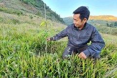 Bất thường về kết quả thẩm định giá cây ăn quả tại Điện Biên