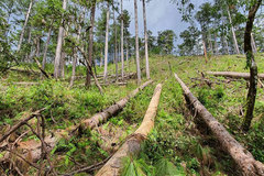Vietnam's primeval forest area shrinking