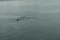 Khoảnh khắc kinh hoàng người đang bơi bị cá sấu khủng rượt đuổi