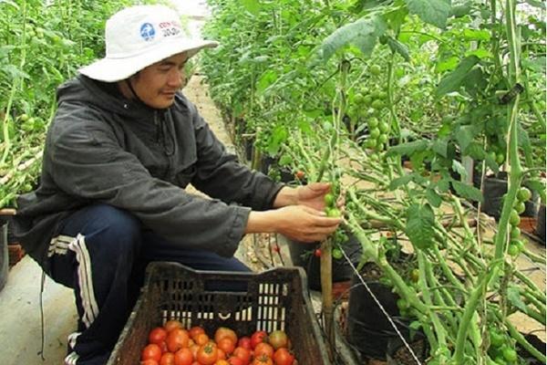 NTM kiểu mẫu nông nghiệp công nghệ cao Ka Đô