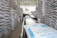 Gov't orders solutions to support rice exporters to EU